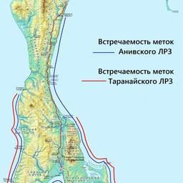 Встречаемость меток Анивского и Таранайского ЛРЗ в 2012 г. на участке побережья Сахалина от Томаринского до Поронайского районов. Рисунок с сайта Сахалинрыбвода.