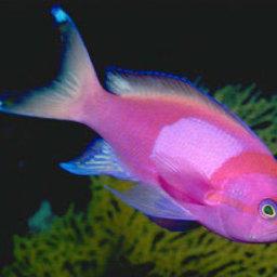 Свыше 50 новых видов рыб обнаружила научная экспедиция у берегов Африки