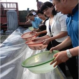 Делегации России и Китая провели выпуск молоди осетровых в пограничные воды Амура. Фото пресс-службы Амурского теруправления Росрыболовства