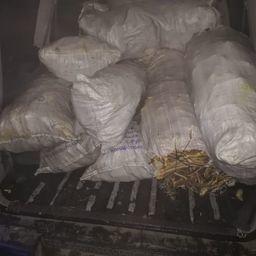 Ценный морепродукт приехал в цех в салоне микроавтобуса. Фото пресс-группы Погрануправления ФСБ по Приморскому краю