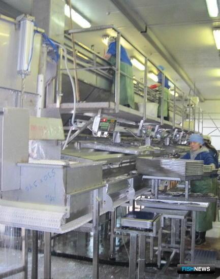 Линия по сортировке и фасовке белорыбицы
