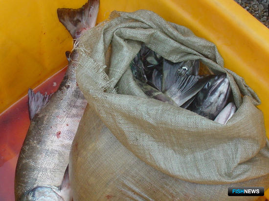Рыбоохрана сосредоточится на борьбе с крупным браконьерством