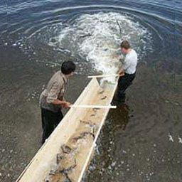 У рыбоводства на Кубани есть огромные перспективы