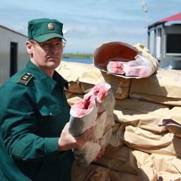 С начала путины через Камчатскую таможню за рубеж отправлено 17 тыс. тонн лососевых. Фото пресс-службы ведомства