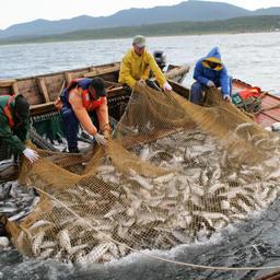 Путина вновь принесла «становые» проблемы рыбакам Сахалина