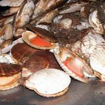 Минсельхоз определил порядок переоформления участков для аквакультуры
