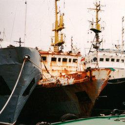 Утилизационный грант – что думают в рыбной отрасли?
