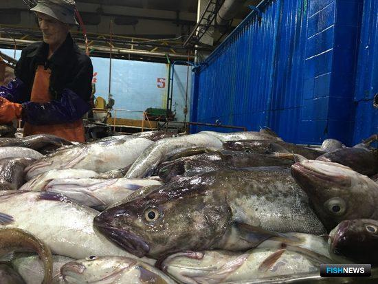 Первая сдача рыбы в рамках «прибрежного эксперимента»