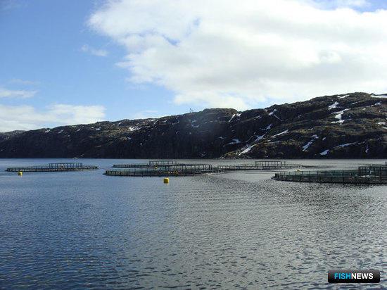 Предприятию ООО «Русское море – Аквакультура» предоставлено 18 рыбопромысловых участков, расположенных в Мурманской области