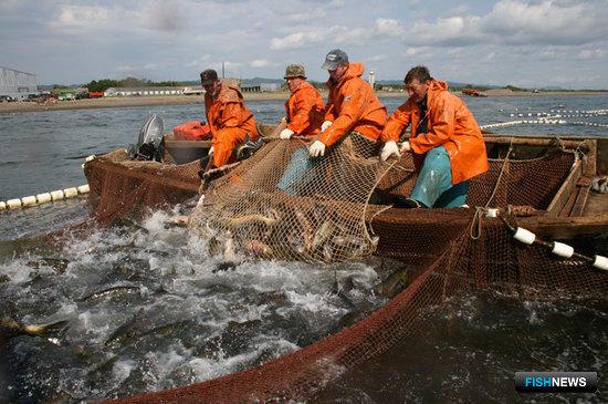 Сахалин поддержит глубокую рыбопереработку