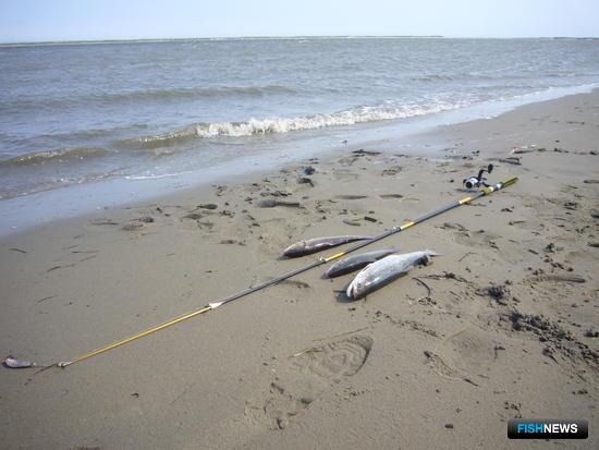 Любительская рыбалка на севере Сахалина