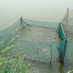 Рыбоводное хозяйство в Ростовской области