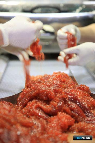 Пробивка икры при помощи сепаратора NRS увеличила средний выход икры на Южно-Курильском рыбокомбинате на 12%