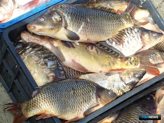 Рыбоводов ждет жаркая осень