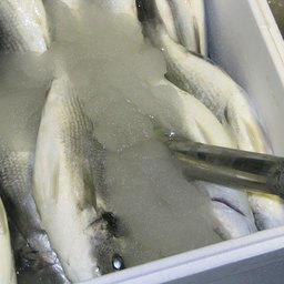 Рыбу можно удивить – водой