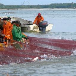 Добыча лосося в Хабаровском крае