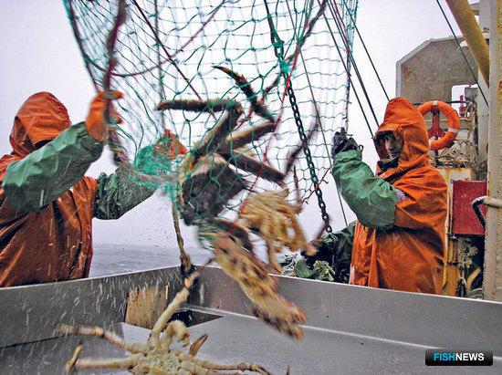 WWF обеспокоен происхождением российского краба