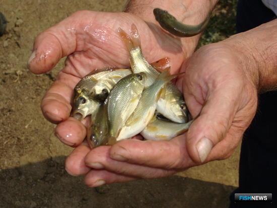 Проблемы рыбоводов обсудят на астраханской земле