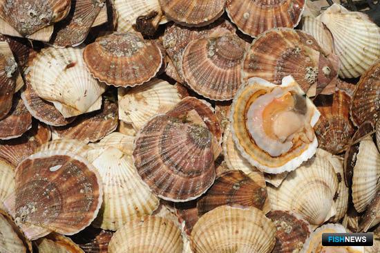 Нормативную базу для аквакультуры обсудят на конгрессе рыбаков