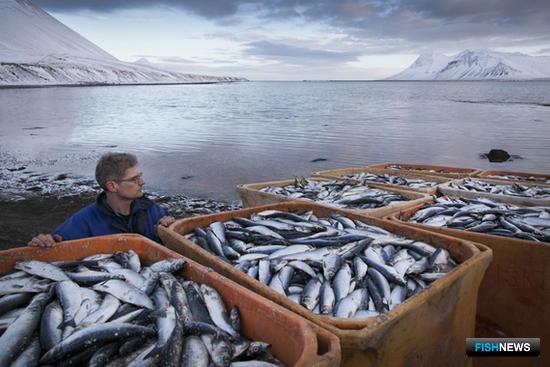 """Российское эмбарго ударило по исландским рыбопромышленникам. Фото газеты """"Ведомости"""""""