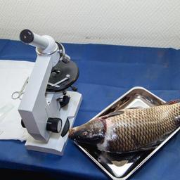 Лабораторные исследования рыбы