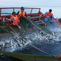 Цены на перевозку рыбы остаются на повестке дня