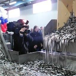 В поселке Усть-Луга Ленинградской области открыт новый комплекс по переработке рыбы. Фото пресс-службы комитета по агропромышленному и рыбохозяйственному комплексу региона