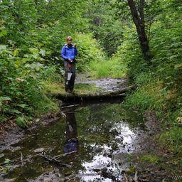 Сбор образцов в лесной луже… Автор фото Федор Казанский