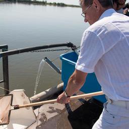 23 июля Александр Жилкин отправил в реку Бахтемир 30 тыс. штук молоди осетровых. Фото пресс-службы и информации администрации губернатора Астраханской области.