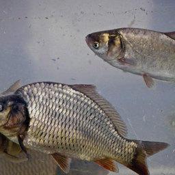 Расти, рыбка, большая и маленькая