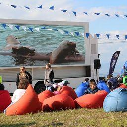 Была организована онлайн-трансляция с видеокамер, установленных на лежбище морских животных. Фото с сайта Кроноцкого заповедника