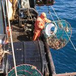 Россия сможет расширить промысел охотоморских крабов