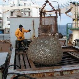 Рыбаки приблизились к отметке в 4,5 млн тонн