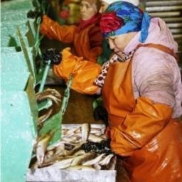 Рыбозавод в ЯНАО. Фото пресс-службы администрации Тазовского района