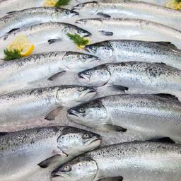 Участники World Food Moscow 2016 отметили возросшую деловую активность в секторе рыбы и морепродуктов
