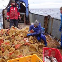 Сахалинский НИИ рыбного хозяйства и океанографии провел весеннюю траловую съемку у Северных Курил. Фото пресс-службы СахНИРО