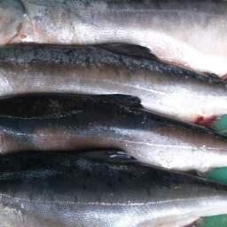 В Ульчском районе Хабаровского края рыбоохрана и полицейские обнаружили в грузовике 447 экземпляров горбуши общим весом 581 кг. Фото пресс-службы Амурского теруправления Росрыболовства