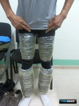 Ценные биоресурсы нарушитель спрятал на теле под одеждой. Фото пресс-службы Хасанской таможни.