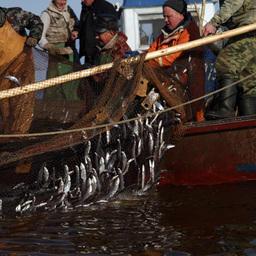 Рыбный промысел на озере Ильмень