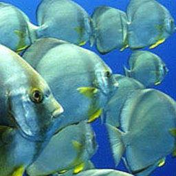 Подводные хранители коралловых рифов