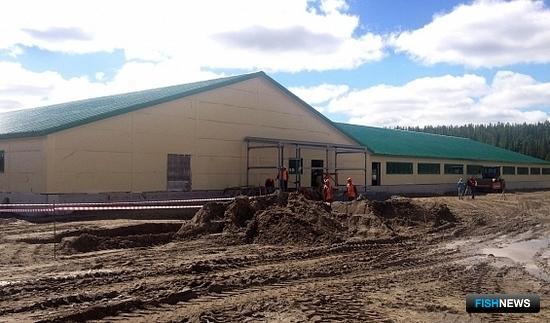 В ямальском поселке Харп продолжается строительство рыборазводного завода на берегу реки Собь. Фото пресс-службы правительства ЯНАО
