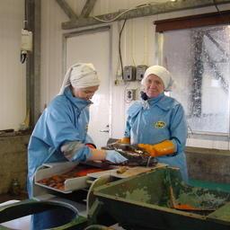 Рыборазводный завод в Сахалинской области