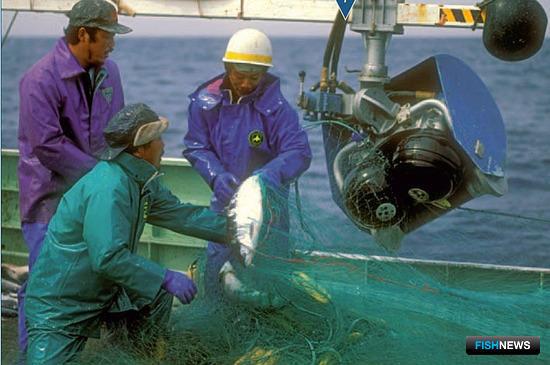 Японские СМИ сообщают о сокращении лососевой квоты