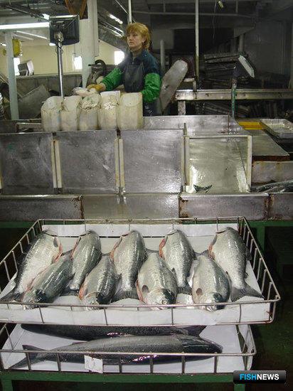 Штучная заморозка рыбы