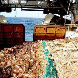 Экологические аспекты рыболовства и сертификация по стандартам MSC