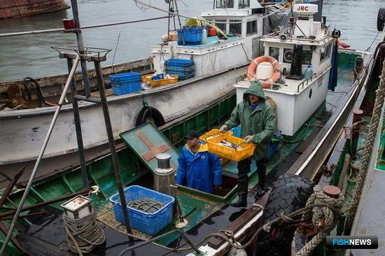 Первые уловы «шестимильки» отправили в продажу. Фото пресс-службы правительства Сахалинской области