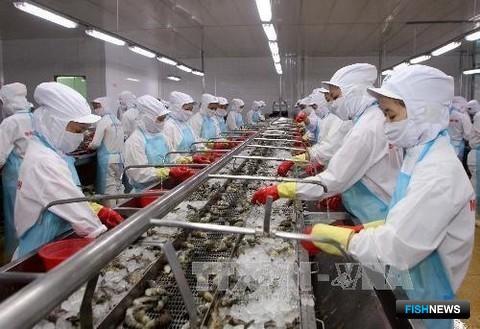 Вьетнамский завод по переработке креветок. Фото Viet Nam Net