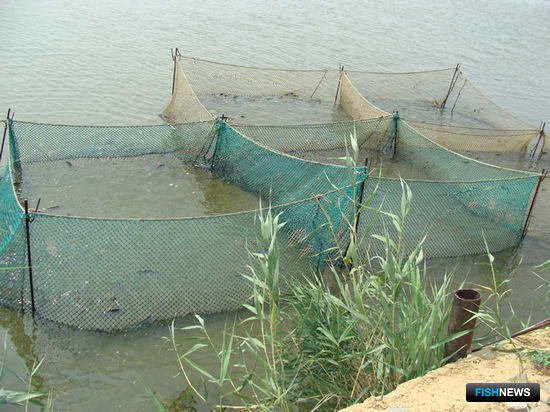 Государство планирует сэкономить на науке и аквакультуре