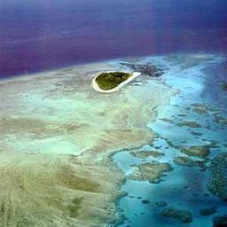 Австралийские ученые нашли новый способ защиты Большого Барьерного рифа