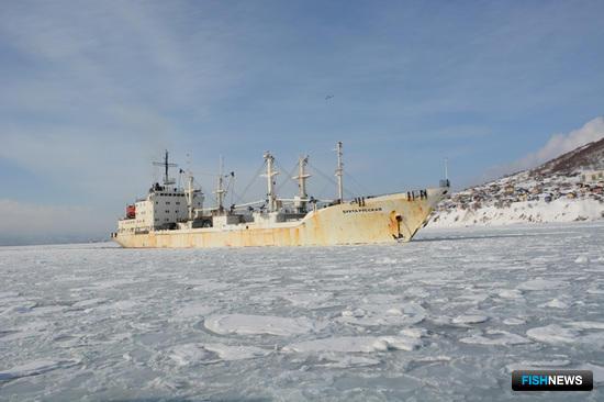 Список судов «Океанрыбфлота» пополнился еще одним  транспортным рефрижератором - «Бухта Русская»